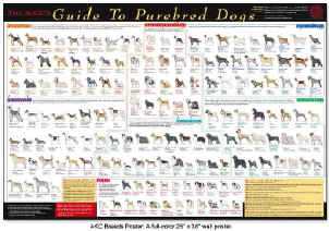 ... poster that shows all the different breeds of dogs (like an educatio